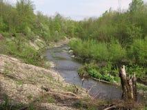 Rivier in de zomerhout Stock Afbeeldingen