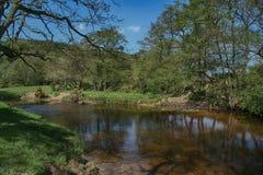 Rivier Derwent dichtbij Groene Moersleutel, Scarborough, North Yorkshire stock foto