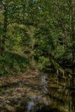 Rivier Derwent dichtbij Groene Moersleutel, Scarborough, North Yorkshire stock fotografie