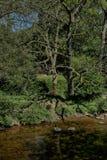 Rivier Derwent dichtbij Groene Moersleutel, Scarborough, North Yorkshire royalty-vrije stock foto's