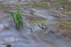 Rivier in Desierto DE los Leones mexico stock afbeelding