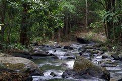Rivier die bos wordt doorgenomen Stock Afbeelding