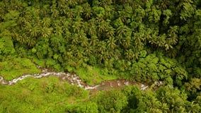 Rivier die in de bergwildernis stromen, Filippijnen, Camiguin stock videobeelden
