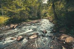 Rivier die door de vallei vloeien carpathians royalty-vrije stock afbeelding