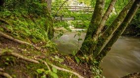 Rivier die door een groen Bos vloeien stock videobeelden
