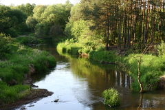 Smalle rivier Royalty-vrije Stock Fotografie