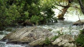 Rivier die voorbij rotsen stromen stock footage