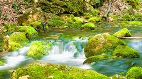 Rivier diep in bergbos. stock afbeelding