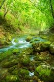 Rivier diep in bergbos. royalty-vrije stock afbeeldingen