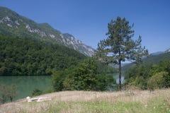 Rivier Drina in Servië Stock Foto's