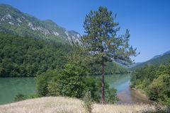 Rivier Drina in Servië Stock Fotografie
