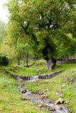 Rivier en bomen Stock Afbeelding