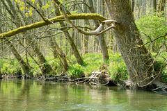 Rivier en Bomen Stock Fotografie