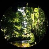 Rivier en bomen door het het kijken glas Royalty-vrije Stock Foto's