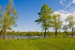 Rivier en bos Stock Afbeeldingen