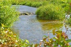 Rivier en groen gras Stock Foto