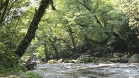 Rivier en groot bos stock footage