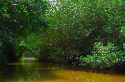 Rivier en Mangroove in Yucatan stock fotografie