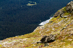 Rivier en Pijnboomvallei Stock Fotografie
