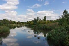 rivier en struikgewas Stock Fotografie
