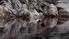 Rivier findhorn bezinning van rotsen van een kalme vreedzame rivier, augustus, Schotland stock videobeelden