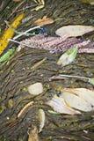 rivier gecondenseerd puin royalty-vrije stock foto