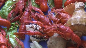 Rivier gekookte rivierkreeften stock footage