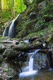Rivier in het bos Royalty-vrije Stock Afbeeldingen