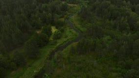 Rivier in het bos stock video