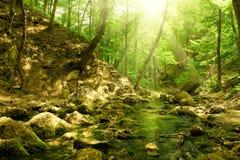 Rivier in het bos Stock Foto's