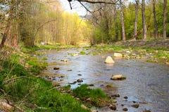 Rivier in het bos Stock Afbeeldingen