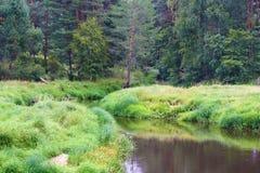 Rivier in het bos Royalty-vrije Stock Foto