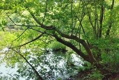 Rivier in het bos Stock Fotografie