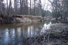Rivier in het bos in Polen Royalty-vrije Stock Foto