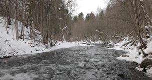 Rivier in het de winterbos in de middag stock videobeelden