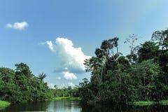 Rivier in het midden van Amazonië met overvloedige vegetatie royalty-vrije stock foto's