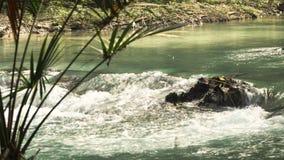 Rivier in het regenwoud stock video