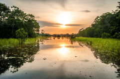 Rivier in het Regenwoud van Amazonië bij schemer, Peru, Zuid-Amerika Stock Foto's