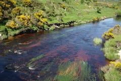 Rivier in Ierland Royalty-vrije Stock Afbeeldingen