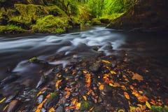 Rivier Kamenice in de herfst, Boheems Zwitserland Royalty-vrije Stock Afbeeldingen