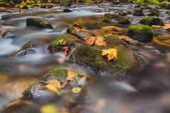 Rivier Kamenice in de herfst, Boheems Zwitserland Royalty-vrije Stock Foto's