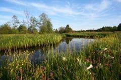 Rivier, kei en vele wildflowers Stock Afbeeldingen