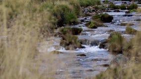 Rivier livet lopen vlot en laag in glenlivet in September Het nationale park van Cairngorms stock video
