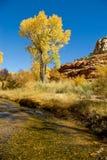 Rivier met Cottonwood Royalty-vrije Stock Afbeelding