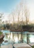 Rivier met een klein kreupelbosje van bomen in de midden, verticale landschapssamenstelling stock foto's