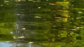 Rivier met gevallen bladeren Langzame Motie stock videobeelden