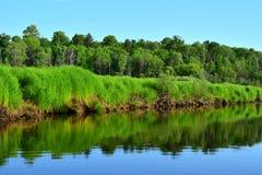 Rivier met steile grasrijke bank, bos op de achtergrond royalty-vrije stock fotografie