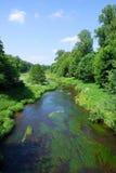 Rivier met weelderig groen Stock Afbeeldingen