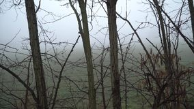 Rivier in mistige dag, waterspiegel rustige scène, boomreflectio in vijver stock video