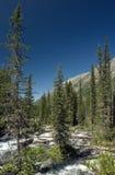 Rivier Multa in bergen Altai stock afbeeldingen